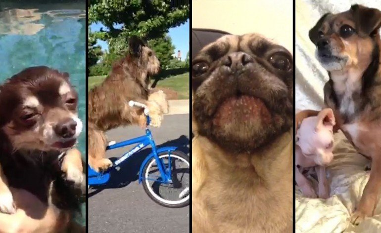 the-best-dog-vines-of-20131