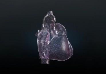 Inside the Human Heart-The Award-Winning 3D Model