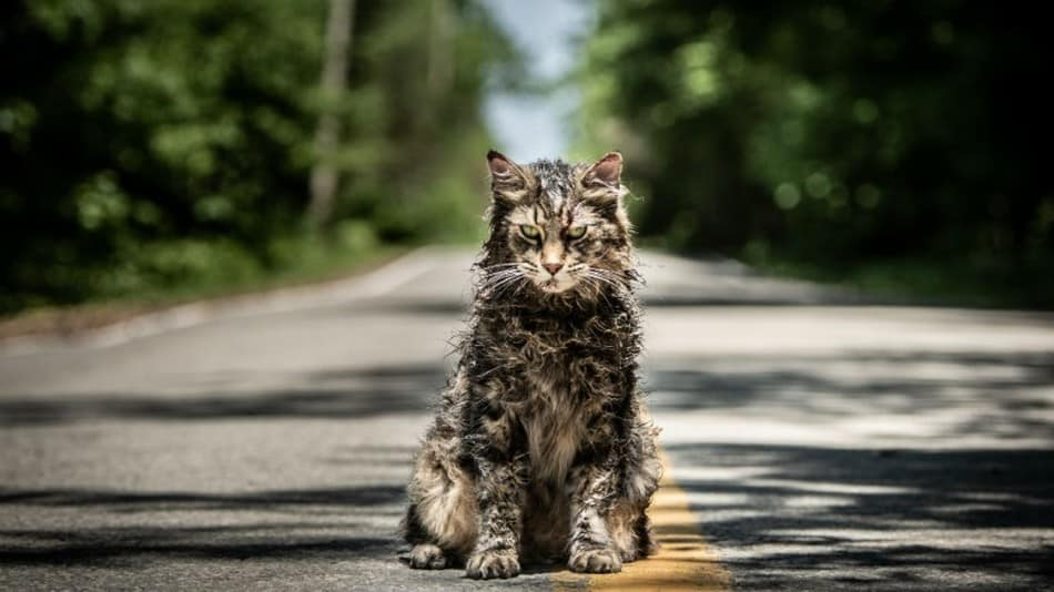 The New Pet Sematary Trailer Has One Really Angry Undead Kitty Cat
